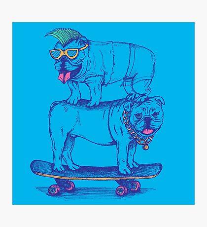 Double Dog Dare Photographic Print