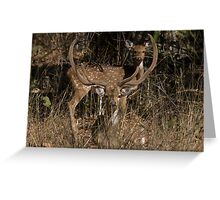 Spotted Deer In The Grass Greeting Card