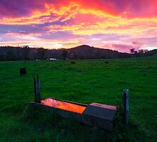 Bahrs Scrub Sunset by McguiganVisuals