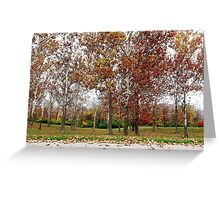 Sycamore Grove Greeting Card
