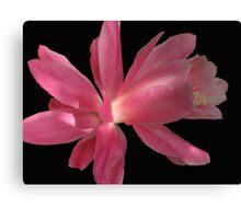 Super Pink Canvas Print