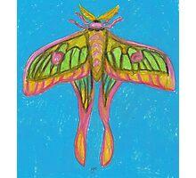 pastel moth Photographic Print