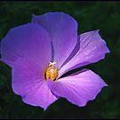 Purple by Photobum