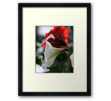 lily 11 Framed Print