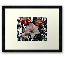 lily 13 Framed Print