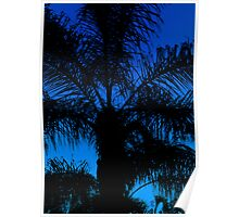 The Palm Darkens at Dusk Poster