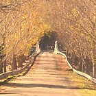 Wee Jasper Bridge in Autumn by Kate Howarth