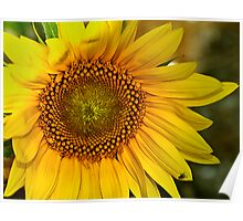 The Sunny Flower Poster