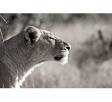 Fierce Lady Lion Photographic Print