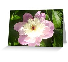 Paeonia officinalis 'Rubra Plena' double-flowered cultivar Greeting Card
