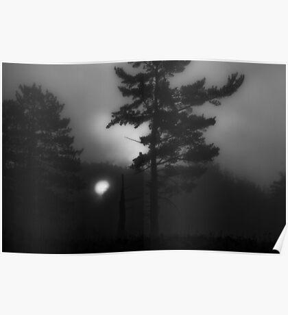 picking thru woods Poster