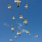 Seagulls in flight by demistified