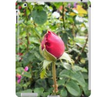 Photography: Nature: A red rose in a garden in Vienna, Austria. iPad Case/Skin