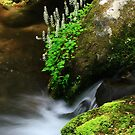 Mountain Streams by Gary L   Suddath