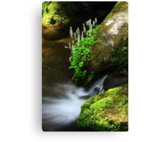 Foamflowers Canvas Print