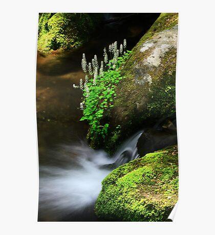 Foamflowers Poster
