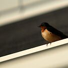 Barn Swallow - Triangles by Ryan Houston