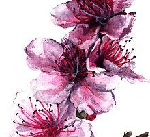 Peach Blossoms by Denise Faulkner