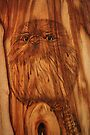 PYROGRAPHY: Young Tawny Frogmouth by aussiebushstick