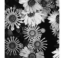 { stars } Photographic Print