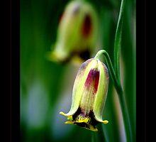 Fritiallaria Bells by orchiddesign