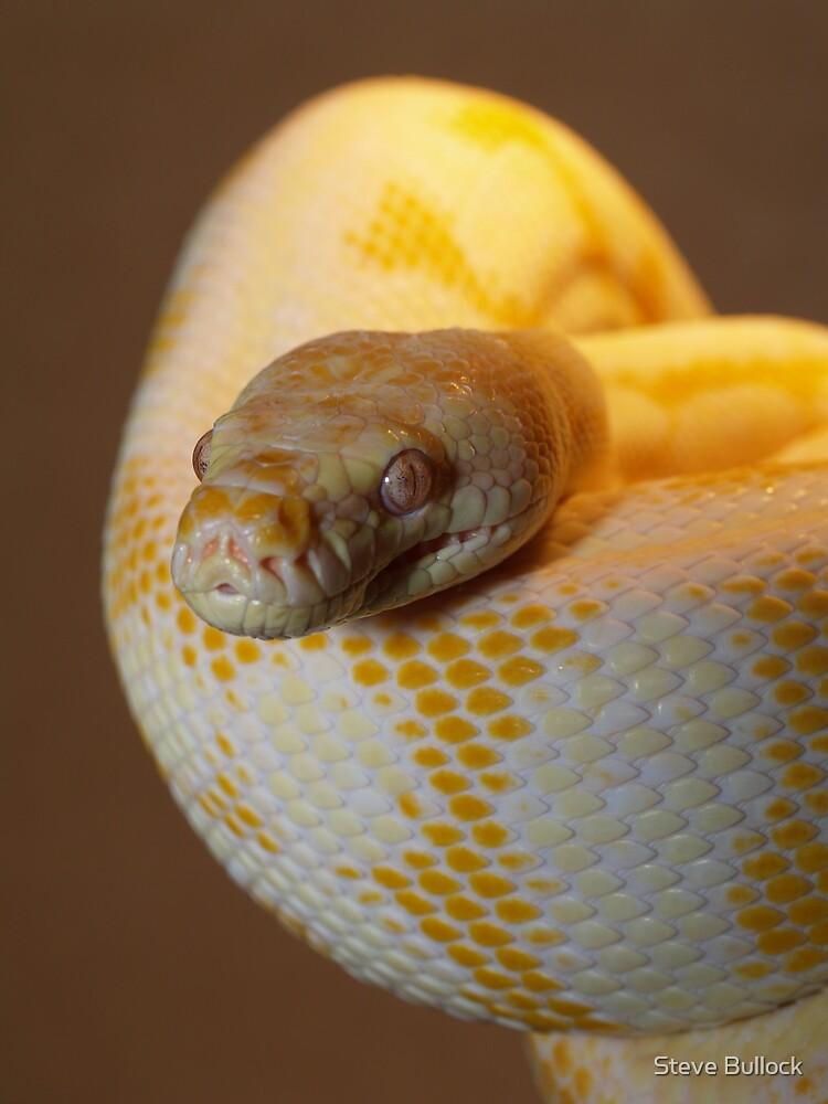 Albino Darwin Carpet by Steve Bullock