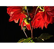 Rhapsody in red Photographic Print