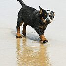 Cute puppy by demistified