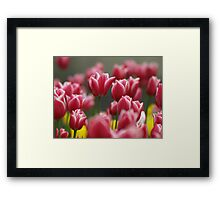 Field of Colour Framed Print