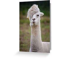 Scene Llama Greeting Card