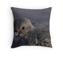In The Eye Of  A Dove Throw Pillow