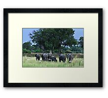 Elephant herd Framed Print