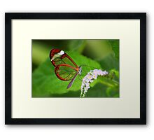 Transparent Butterfly  Framed Print