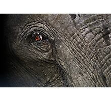 Eye of an African elephant Photographic Print