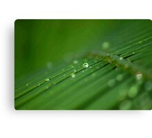 """SURVIVAL"" of a raindrop Canvas Print"