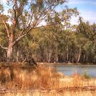 River Red Gum Heaven # 2 - Barmah-Millewa National Park - The HDR Experience by Philip Johnson