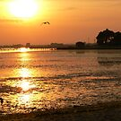 Sunset Over Poole Bay with Seagull by qshaq