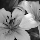 Lilies at Peace by Rebecca Silverman