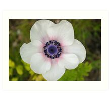 Pink and Blue on Nature's White Canvas Art Print