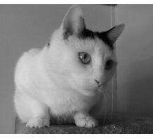 animal friends shelter cat B&W Photographic Print