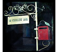 Curlew Ave Photographic Print