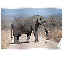 Elephant crossing Poster