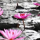 Lilies in a pond by demistified