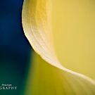 Bliss by Darrell Sharpe