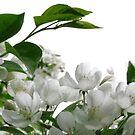 White on White by Nancy Polanski