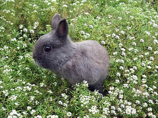 Bunny in Sweet Heaven by Michael John