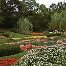 Flowerbeds by Celeste Thinks