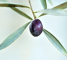 Lone Olive by metriognome