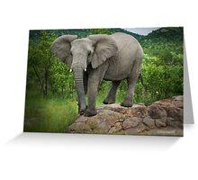 Posing I am (Elephant - loxodonta africana) Greeting Card