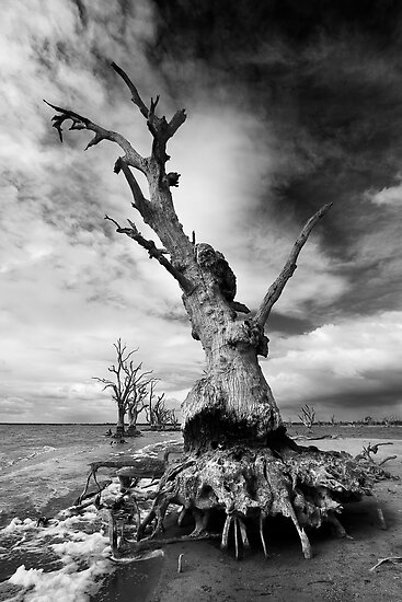 Crab Tree - Mono by KathyT